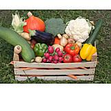 Healthy Diet, Vegetable, Harvest
