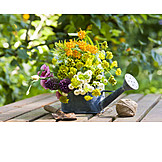Garden, Decoration, Watering Can
