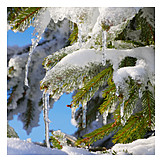 Winter, Ice, Icicle, Fir Branch