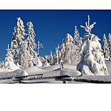 Winter, Winter Landscape, Snowy