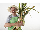 Agriculture, Harvest, Farmer, Maize