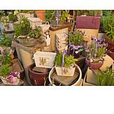 Garden, Garden Center, Home Garden