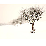 Winter, Winter Landscape, Snowy, Snowscape