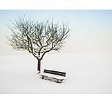 Winter, Winter Landscape, Snowscape