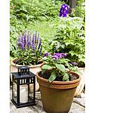 Garden, Flower Pot