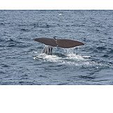 Fluke, Whale, Fin