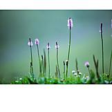 Nature, Plantain