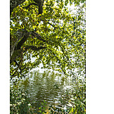 Tree, Water, Foliage
