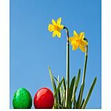 Easter, Easter Egg, Daffodils