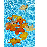 Autumn, Leaves, Autumn Leaves, Maple Tree