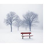 Tree, Winter, Bank