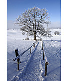Tree, Footpath, Winter