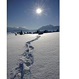 Winter, Snow Track, Winter Sun