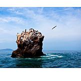 Rock, Pacific ocean, Frigate
