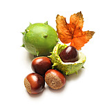 Autumn, Chestnut Tree, Tree Fruit