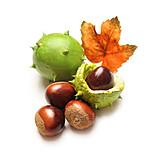 Autumn, Chestnut Tree, Tree Fruit