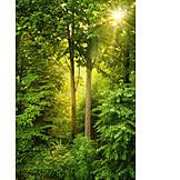 Forest, Sunbeams, Deciduous forest