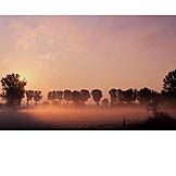 Sunrise, Fog, Autumn