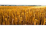 Field, Field Stubble, Harvested