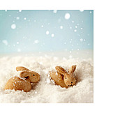 Winter, Rabbit
