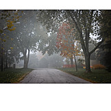 Hazy, Autumn, Foggy