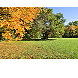 Autumn, Autumn Landscape