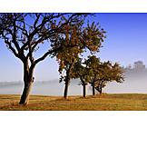 Tree, Fog