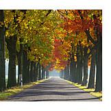 Autumn, Autumn, Alley
