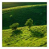 Nature, Summer, Hill