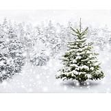 Winter, Snowy, Christmas tree