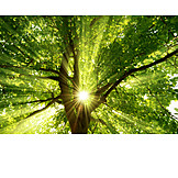 Backlighting, Tree, Sunbeams