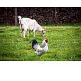 Species appropriate, Organic farming