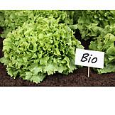 Salad, Bio