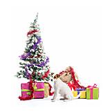Christmas, Dog, Christmas present