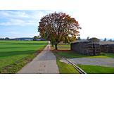 Footpath, Field elm