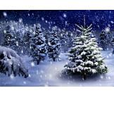 Snowy, Christmas tree, Spruce tree