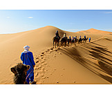 Sahara, Tour, Caravan, Camel train