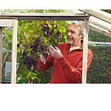 Senior, Gardening, Grapes
