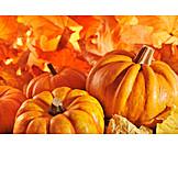 Autumn, Squash