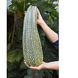 Zucchini, Giant zucchini