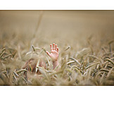 Boy, Child, Hiding, Wheat Field