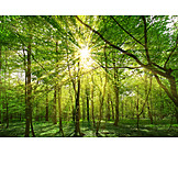 Nature, Forest, Ecology