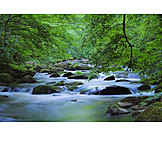 Nature, Stream, River