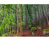 Forest, Beech grove