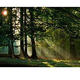 Forest, Sunbeams, Mystical, Light beam