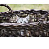 Kittens, Kitten