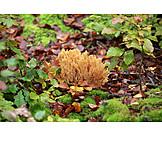 Mushroom, Gold yellow coral