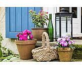Decoration, Flower pot, Patio