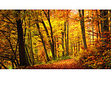 Autumn, Deciduous forest, Indian summer
