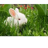 Young animal, Rabbit, Fluffy